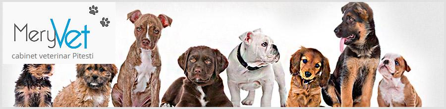 Cabinet veterinar MeryVet Pitesti Logo
