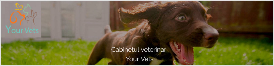 Cabinet Veterinar Your Vets sector 3 Logo