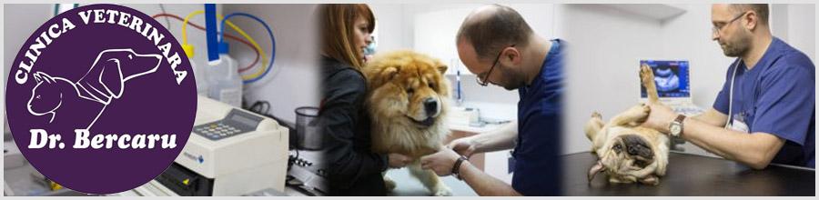 Dr. Bercaru-cabinet veterinar- Bucuresti Logo