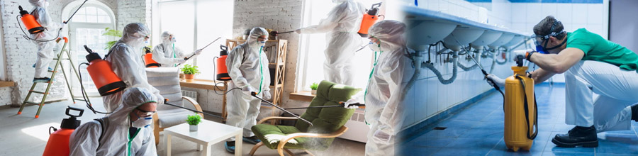 Vanatorii De Gandaci - Dezinsectie, deratizare, dezinfectie, Bucuresti si Ilfov Logo