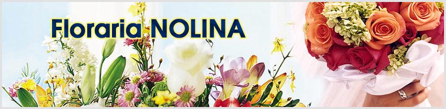 Floraria NOLINA Logo