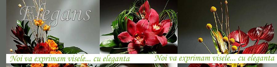 ELEGANS Logo
