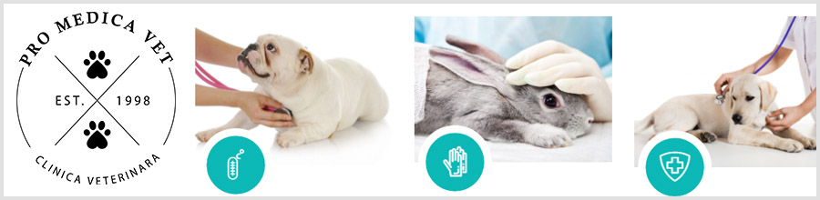PRO MEDICA VET servicii veterinare zona Timpuri Noi- Tineretului Logo