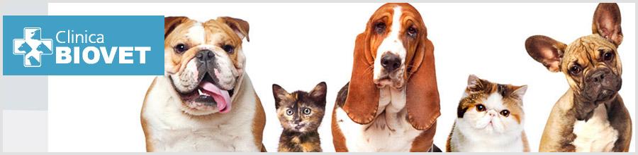 Biovet-cabinet veterinar-Bucuresti Logo