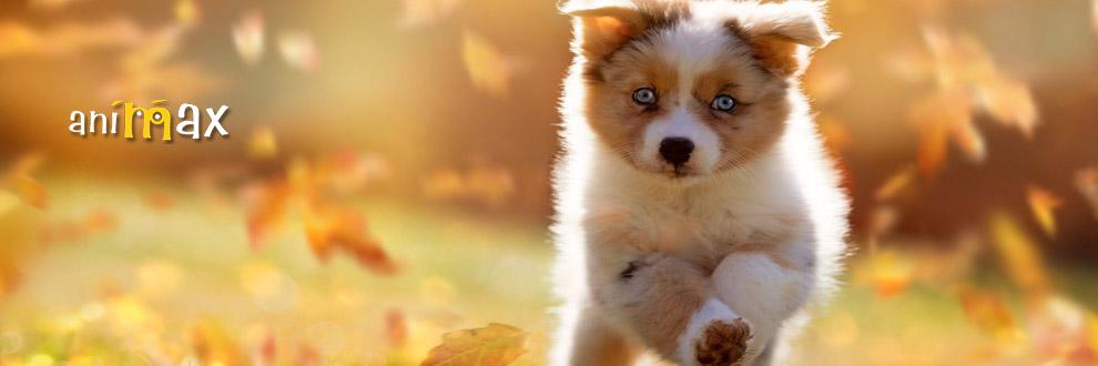 ANIMAX produse pentru animale de companie Logo
