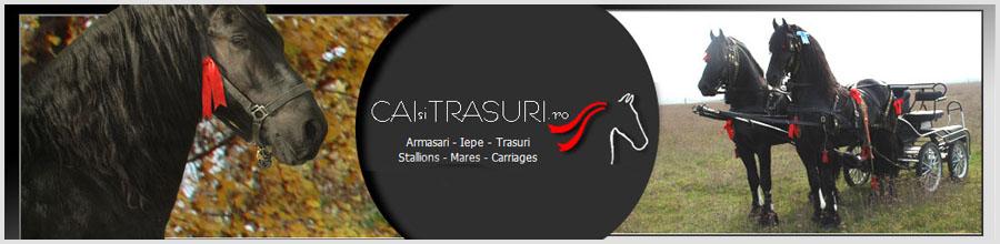 CAI SI TRASURI - Atelaje si trasuri pentru evenimente Logo