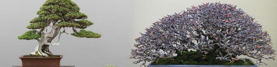 Atelier Bonsai, Bucuresti - Comercializare si ingrijire bonsai Logo