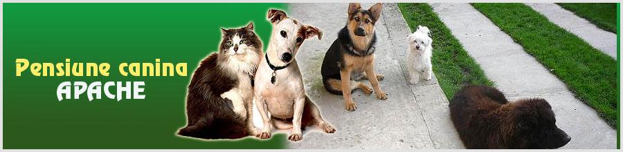 Pensiune canina APACHE Logo