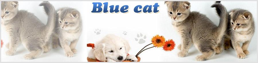 Blue Cat-cabinet veterinar- Bucuresti Logo