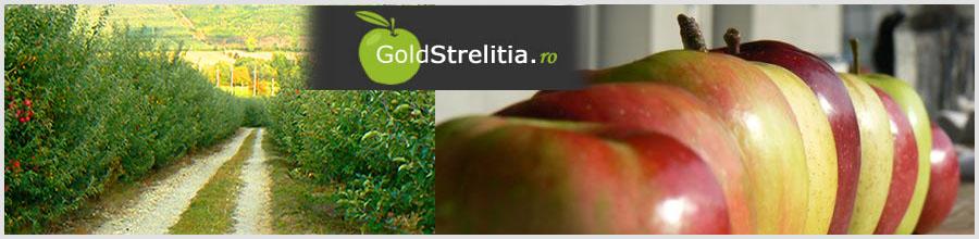 GOLD STRELITIA Logo