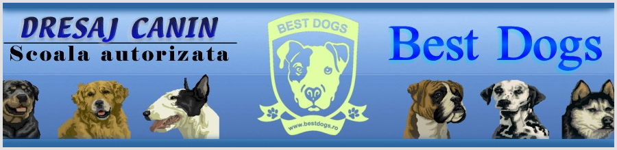 BEST DOGS Logo