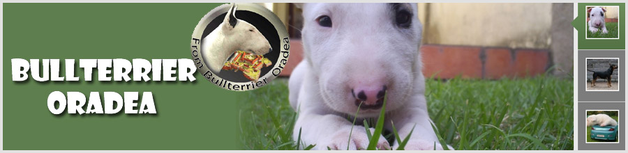 From Bullterrier Oradea Kennel Logo