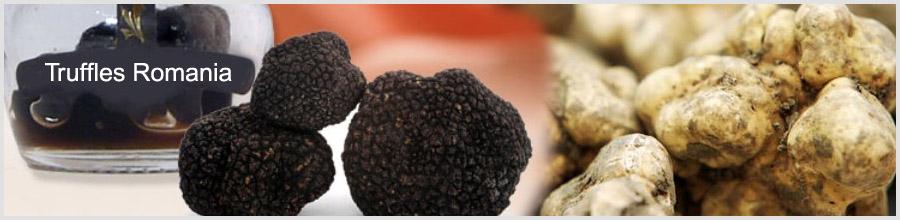 Truffles Romania Logo