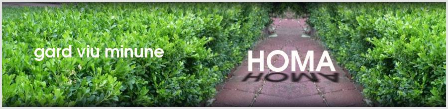 HOMA, Sfantu Gheorghe / Covasna - Gard Viu Minune, planta cu crestere rapida Logo