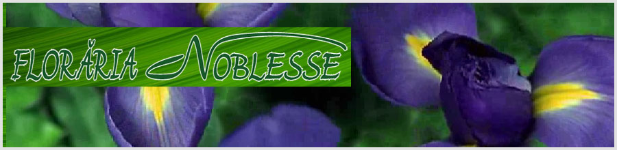 Floraria Noblesse Braila Logo