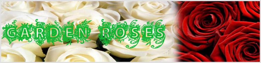 GARDEN ROSES Logo
