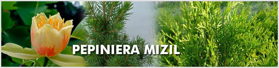 Pepiniera Mizil Logo